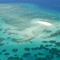 'Zero prospect' of recovery after Great Barrier Reef decimated by the heat and Cyclone Debbie