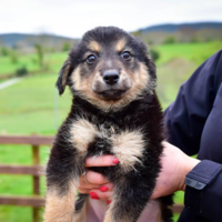 Humans of Dublin teamed up with the DSPCA to create the heartbreaking 'Rescue Dogs of Dublin'