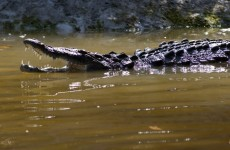Ten-year-old girl eaten by crocodile as father looked on