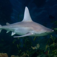 17-year-old girl killed by shark off Australian coast