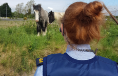 Lost some horses? Gardaí found a couple wandering in Naas this morning