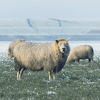 There's some wintry weather on the way this week
