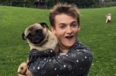 Jack Gleeson tweeted a photo of himself holding a pug and it's obviously now a meme