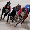 Not everyone is happy that Dublin's iconic greyhound track in Harold's Cross is to be sold