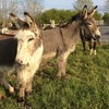'We're struggling to keep the doors open': Donkey sanctuary appeals for money