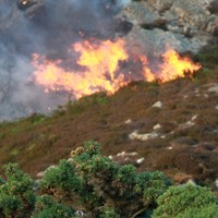 Farmers who started 'illegal' gorse fires may have Basic Payment Scheme grants docked