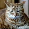Man planned to abduct and electrocute a former lawyer - and blame his cat