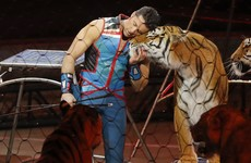 'The greatest show on earth' has ended after 146 years