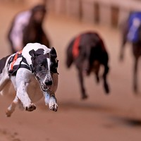 It just sold a stadium for €23 million - but there are warnings the greyhound industry is 'in danger'