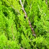 Gardaí say prickly hedges can help prevent burglaries