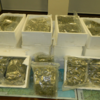 Gardaí seize €600k worth of cannabis after searching a car in north Dublin