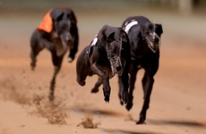 Live greyhound racing is back in Dublin after a four-month dispute