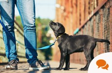 What I learned about being better at business networking... from a dog