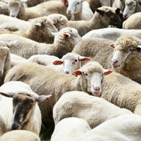 Irish farmers warned about Bluetongue virus after outbreaks in France