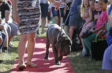 Martha the Mastiff is the world's ugliest dog