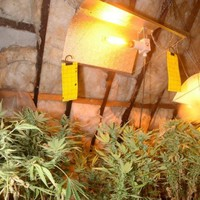 Man in his 60s arrested after discovery of 'sophisticated' cannabis growhouse worth €350,000 in Kerry
