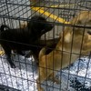 These dogs were seized today at Dublin Port because they had no passports