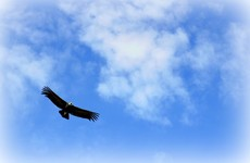 Dublin family to stay in their home after vulture fund's repossession case is struck out