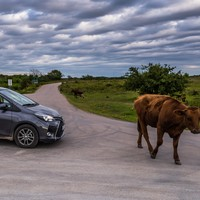 Cars for beef: Japan and the EU have signed a 'huge' trade deal but not everyone's happy