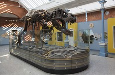 Dublin Zoo's latest attraction is...dinosaurs