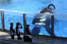 Killer whales sue Seaworld for 'slavery'