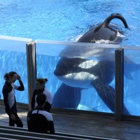 Killer whales sue Seaworld for 'slavery'