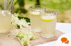 Gardening: Forage elderflowers now for a fresh, blossom-infused cordial