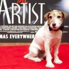 In photos: Canine star of The Artist to bow-wow out of show business over illness