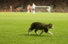Twitter star: 'Anfield Cat' gets nearly 40k followers