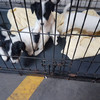 Revenue seized four puppies from couple headed to the UK at Dublin Port today