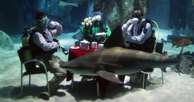 Eating with the fishes: Shark tea party in London Aquarium