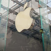 Ireland is looking for someone to hold onto the €15 billion from Apple's tax bill