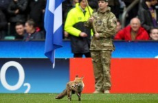 The Magnificent Seven: Animals invading sports