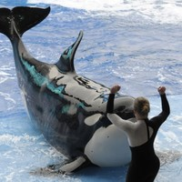 'Whale slavery' case flops in court