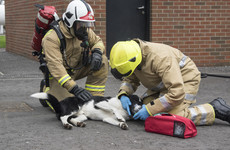 UK firefighters using mini oxygen masks specially designed for pets