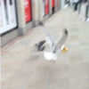 22 tweets that sum up what it's like to live among seagulls in Ireland