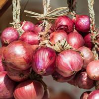 Grow it yourself: 'Onions - a phenomenally useful veg'