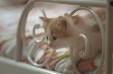 Video parodies IKEA cat ad