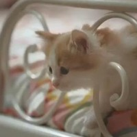 Video parodies IKEA cat ad