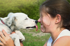 Poll: Would you let a dog lick your face?