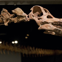 A newly-found dinosaur makes the T-rex look tiny