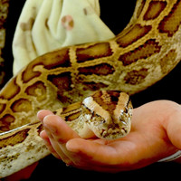 Prisoners care for animals, including snake addicted to meth, as part of rehab programme