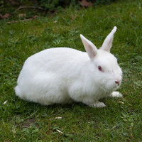 UCC spent €200,000 in 2016 on rabbits, rats, pigs, and birds which were used in live experiments