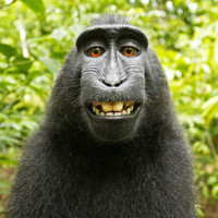 British photographer wins court battle over monkey selfie