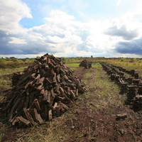 'A chance to discover 10,000 years of history': New project to restore Ireland's bogland