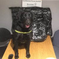Sniffer dog Scooby helps seize €230,000 worth of cannabis at Dublin Airport
