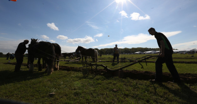 Scoring all over the field: Irish ploughing experts share their tricks of the trade