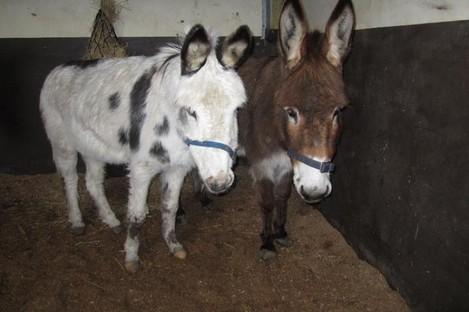 Hugo and Hugs, rescued from Sligo