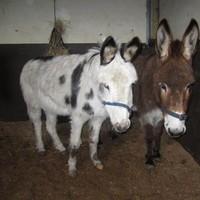 ISPCA rescues five donkeys in one week