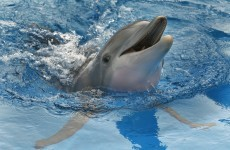 Dolphins deserve rights as 'persons', experts say